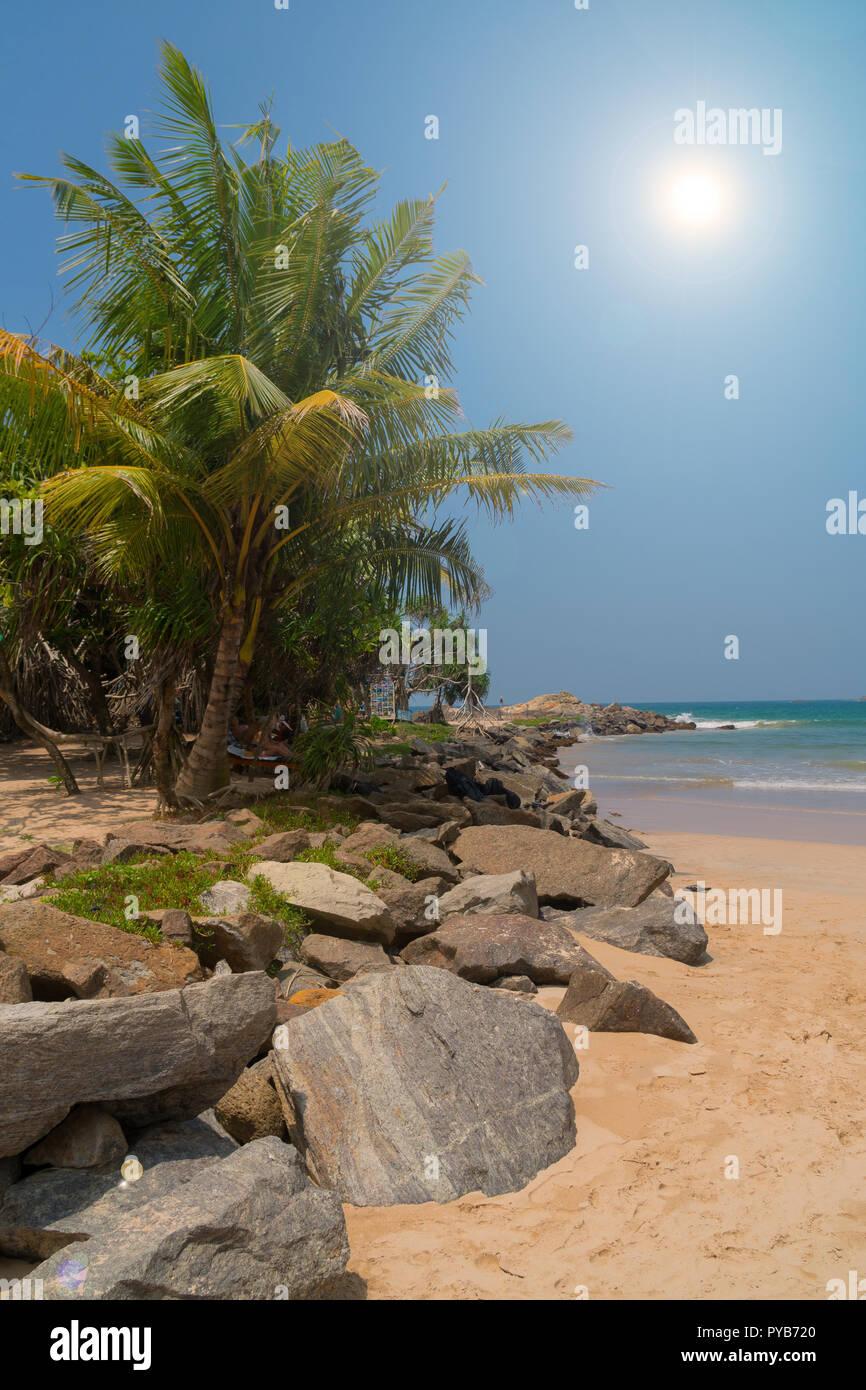 Des pierres et des palmiers sur une plage de sable. Banque D'Images
