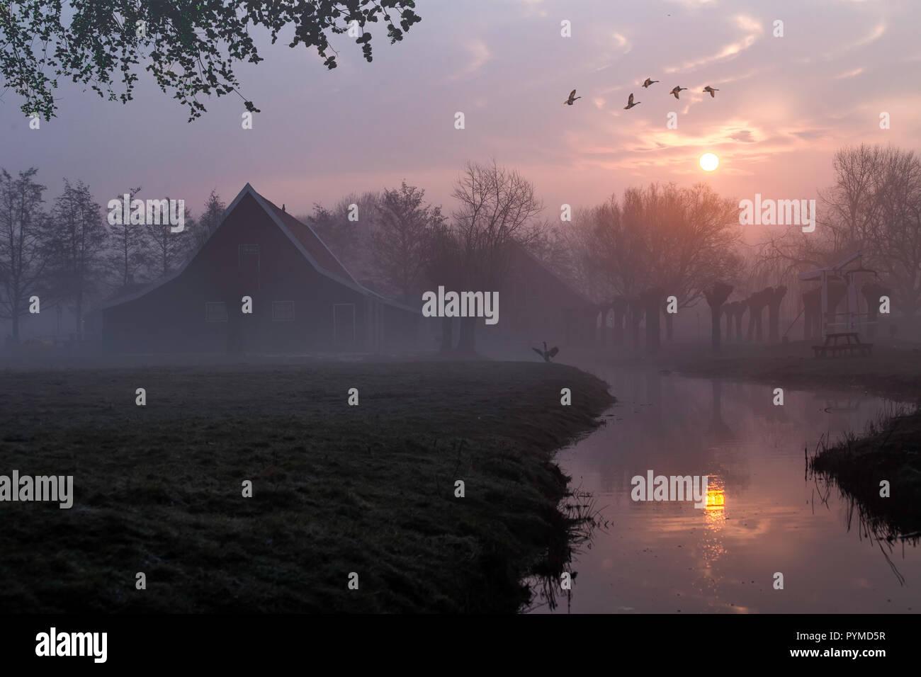 Canards survolant une belle architecture maisons en bois typiquement néerlandais au sunrise moment mis en miroir sur le canal calme de Zaanse Schans situé dans e Banque D'Images