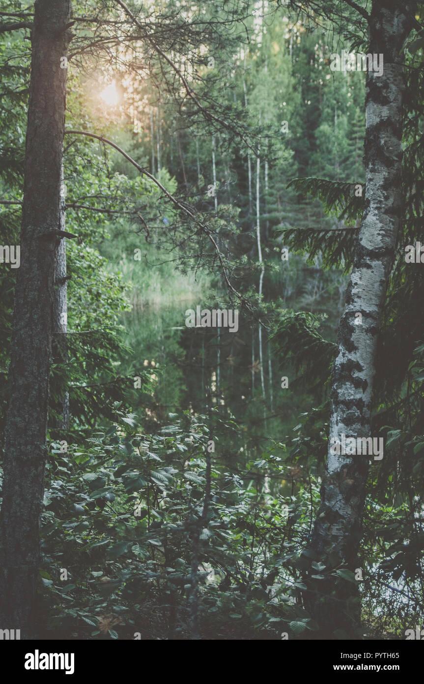 Paysage verdoyant avec des arbres et de réflexion dans l'eau. L'heure d'été. Banque D'Images