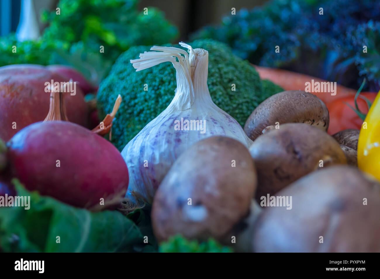 Propagation végétale avec espace pour copier Photo Stock