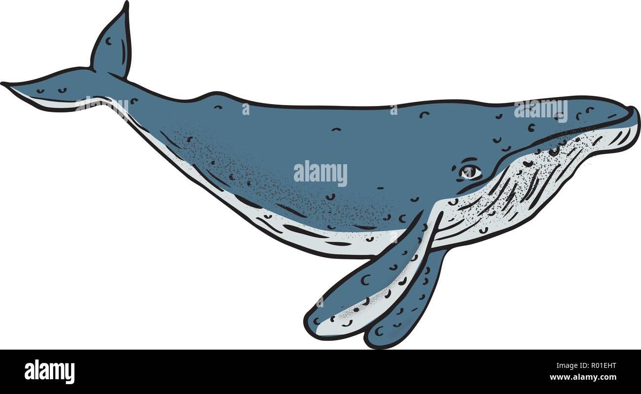 Croquis Dessin Illustration De Style D Une Baleine A Bosse Une