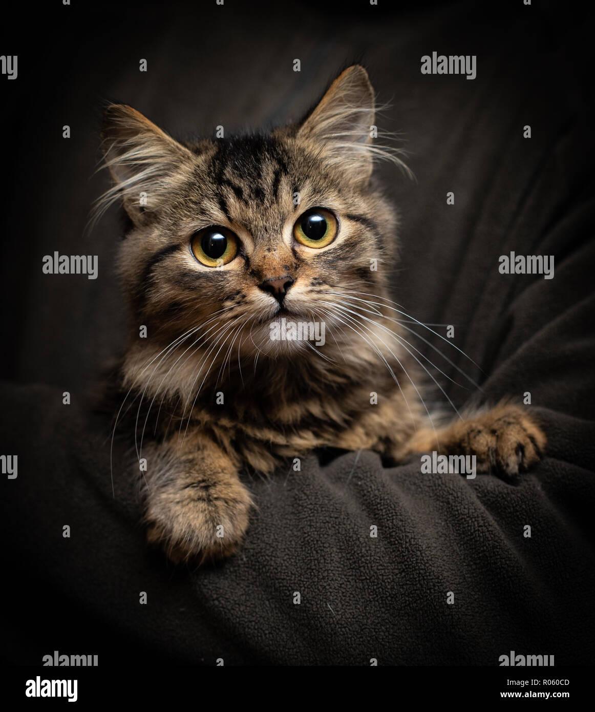 Belle fluffy chat drôle sur le fond noir Photo Stock
