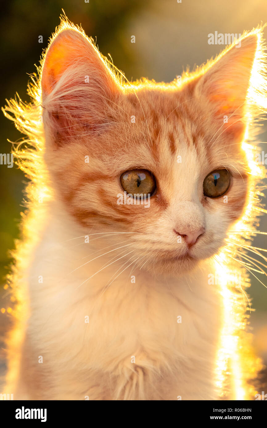Portrait de chat pendant le coucher du soleil Photo Stock