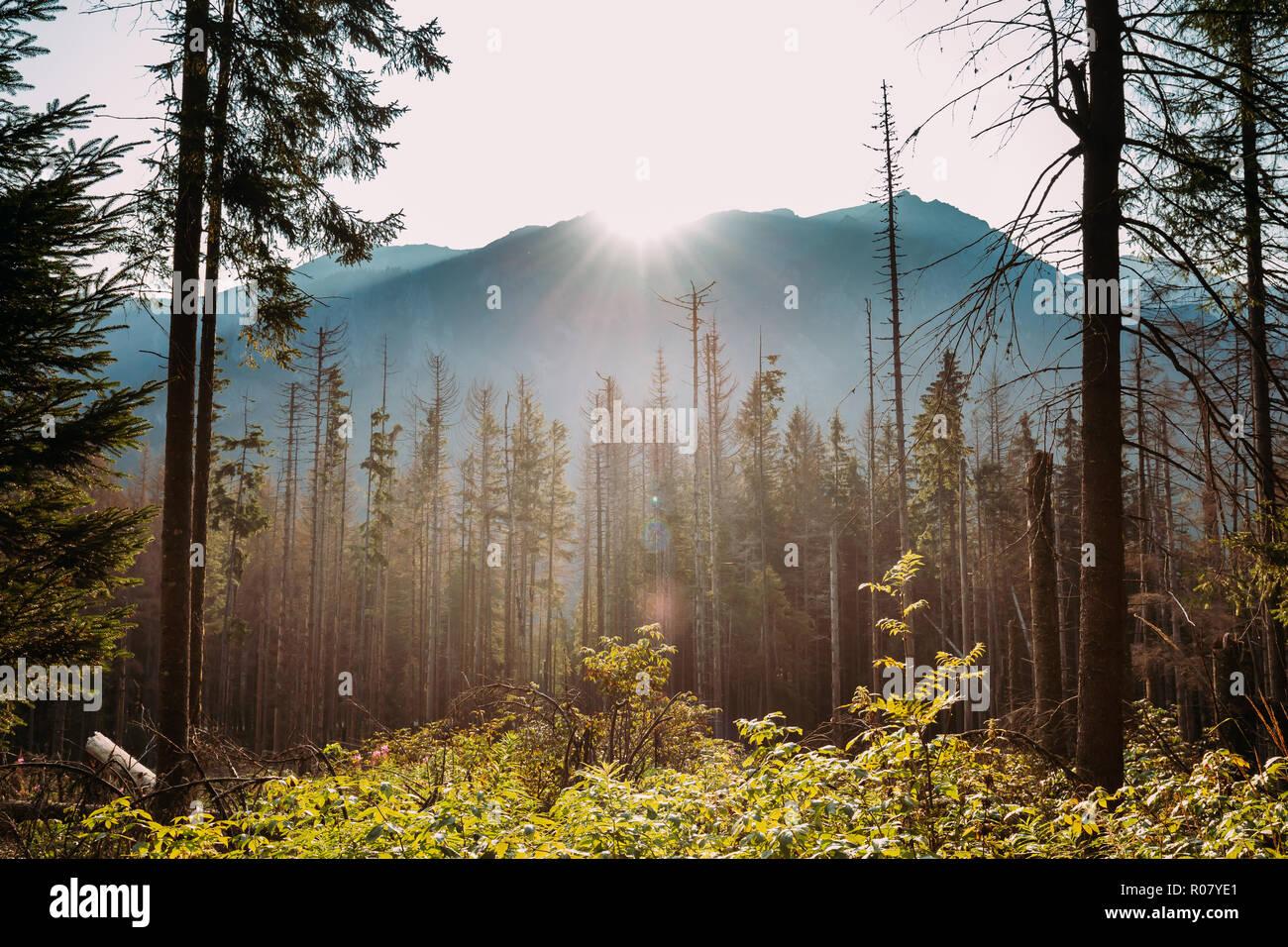 Parc National des Tatras, en Pologne. Lever du soleil au-dessus des montagnes d'automne et de paysages forestiers. Soleil Soleil avec la lumière du soleil à travers les bois des arbres dans matin. Belle Banque D'Images