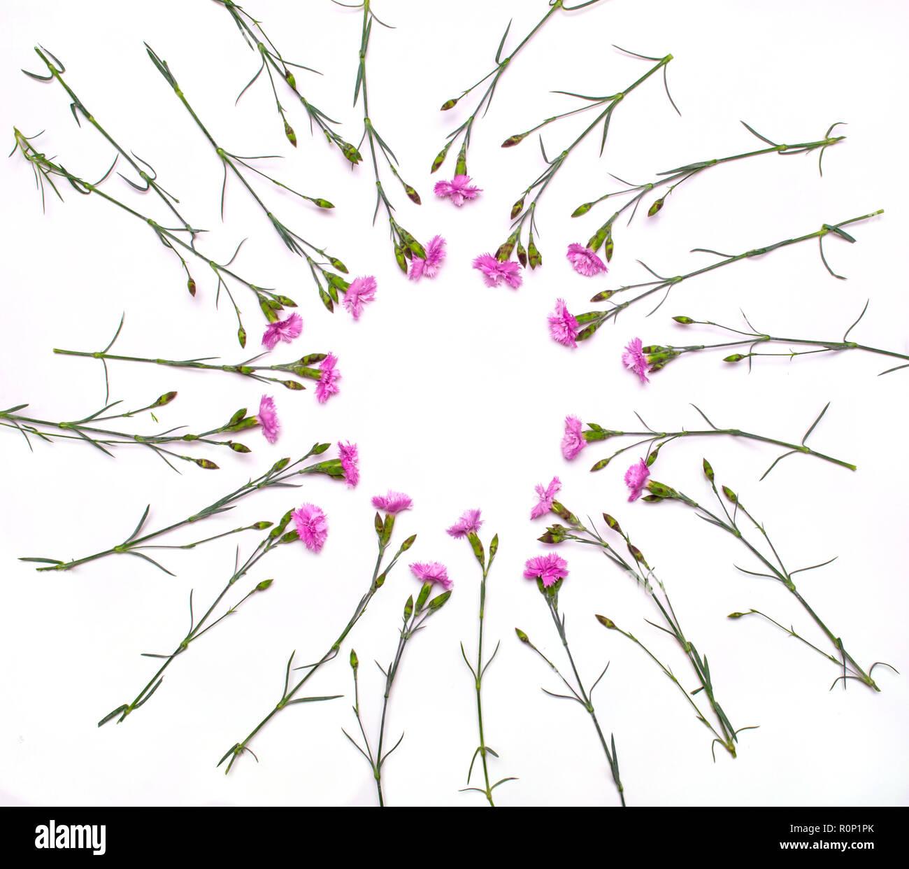 Image Pour Mettre Dans Un Cadre cadre rond de fleurs délicates. printemps des fleurs roses