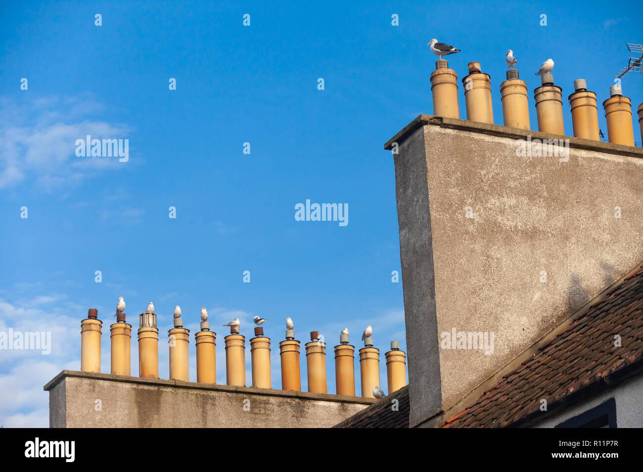 Mouettes assis sur des pots de cheminée contre un ciel bleu dans Cramond près d'Edimbourg en Ecosse Photo Stock