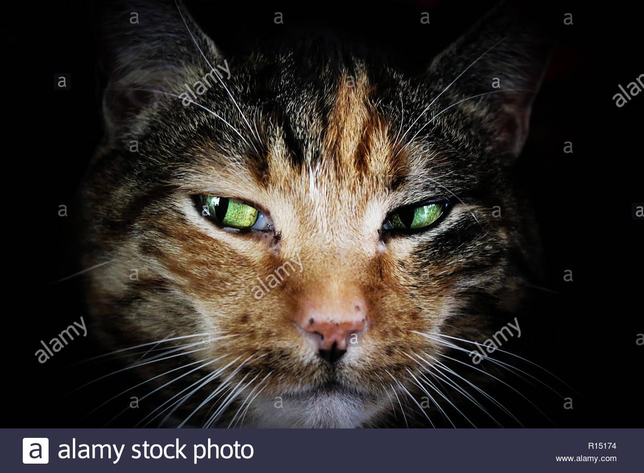 Chat mignon closeup Photo Stock