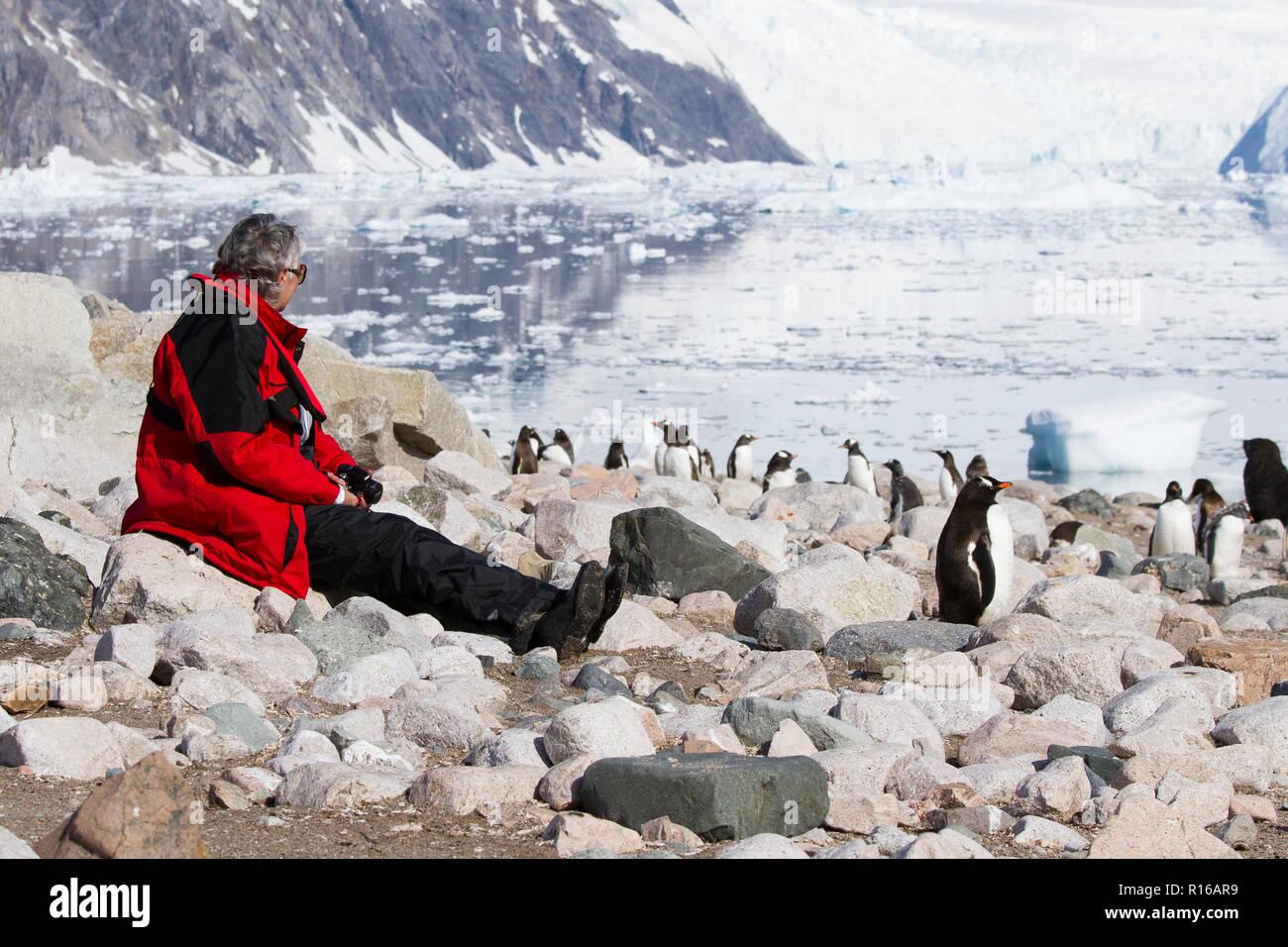 L'antarctique les touristes avec des pingouins dans l'Antarctique paysage. Photo Stock