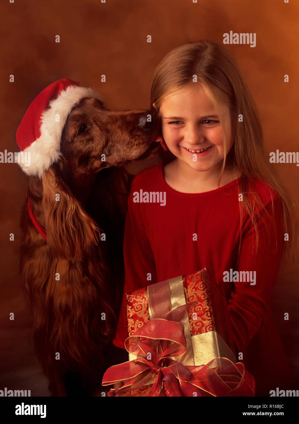 Chien comme cadeau de Noël Photo Stock