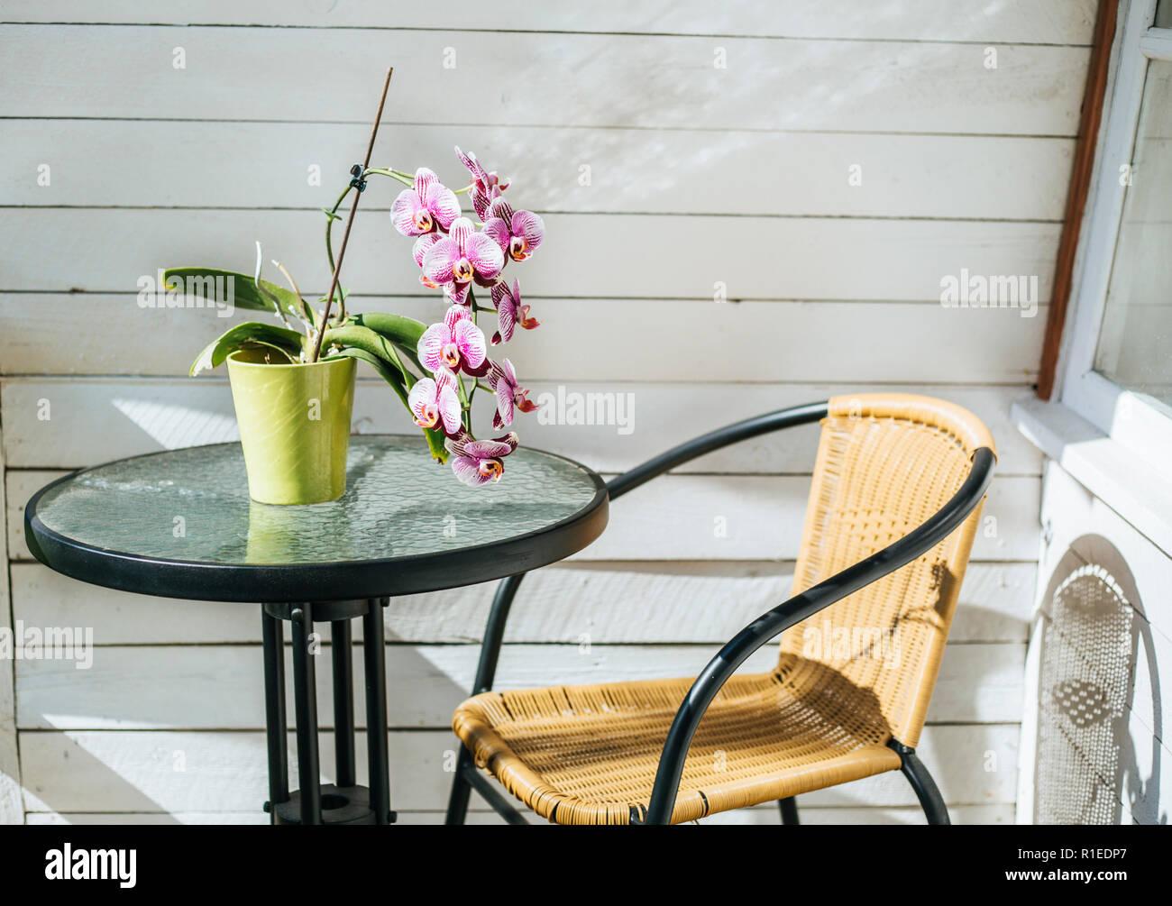 White Orchid pink mix en vert pot de fleurs sur une table de jardin ...