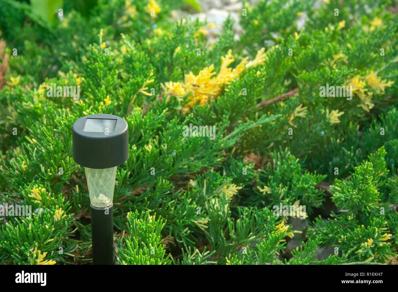 Lampe solaire pour jardin dans le Buisson de genévrier ...