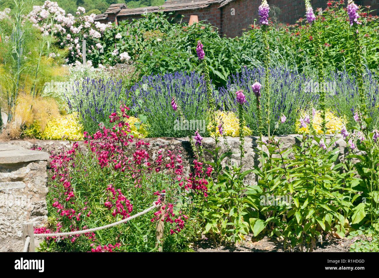 Jardin d\'été colorés avec des roses lavande et autres fleurs ...