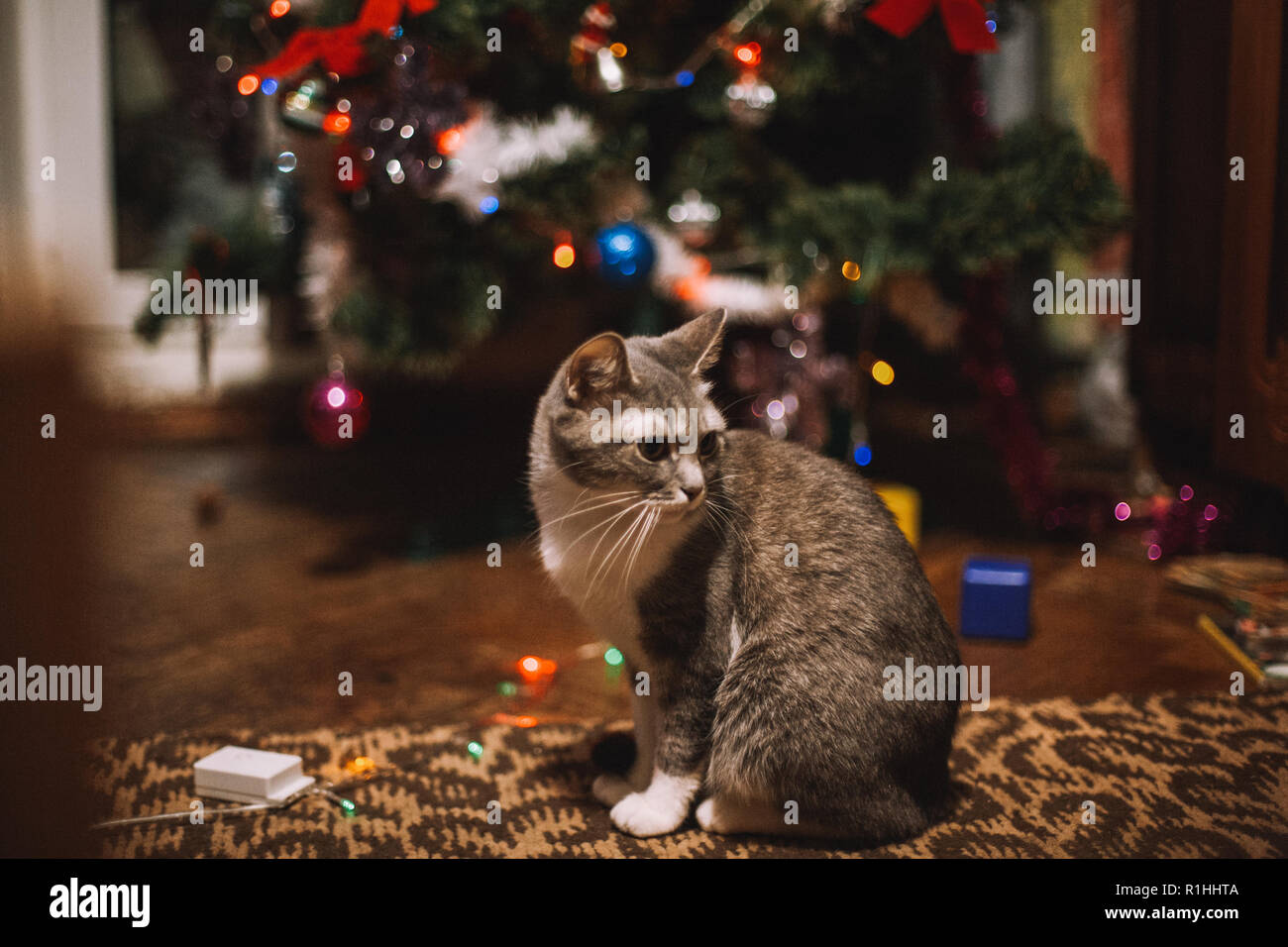Chat assis sur le sol à côté de l'arbre de Noël à la maison Photo Stock