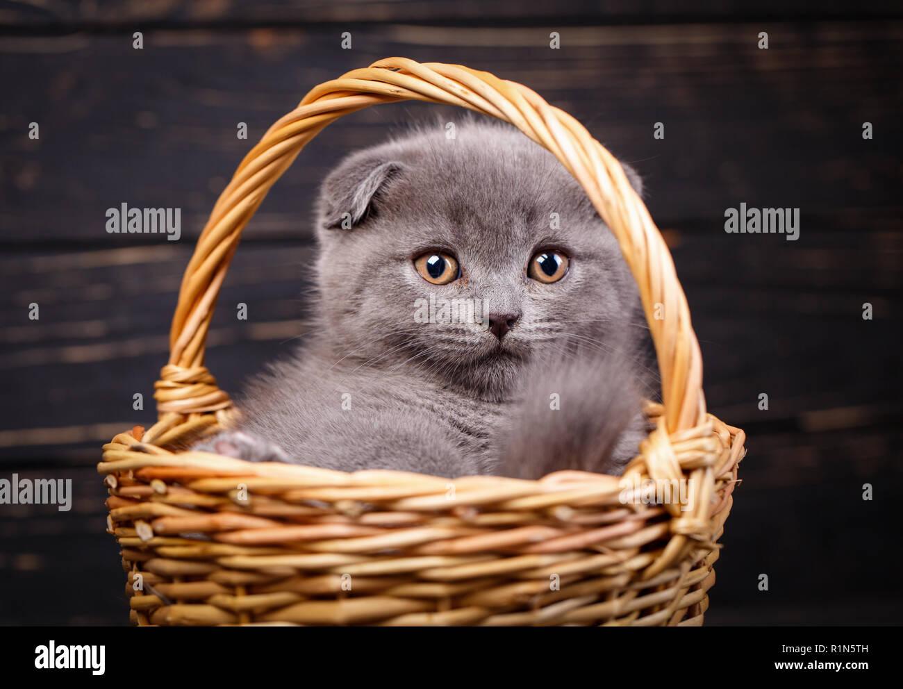 Chat dans un panier en osier sur un fond noir Photo Stock