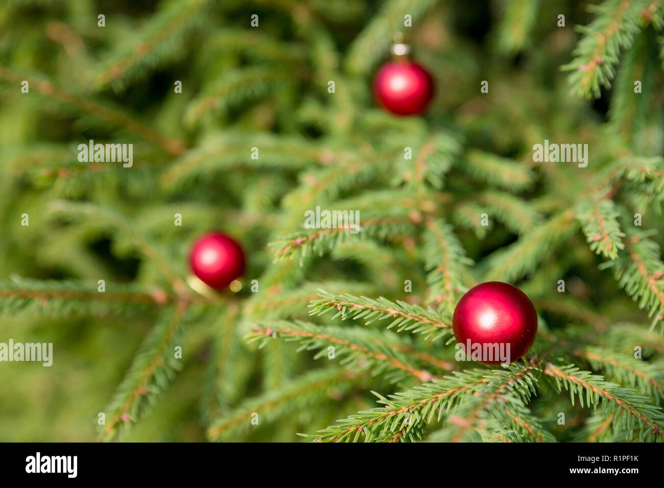 Ornements Rouge Sur L Arbre De Noel Boule De Noel Decoration