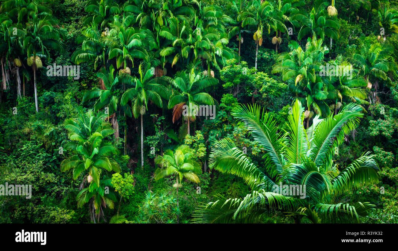 Chutes Umauma le long de la côte, la luxuriante Hamakua Big Island, Hawaii, USA Banque D'Images