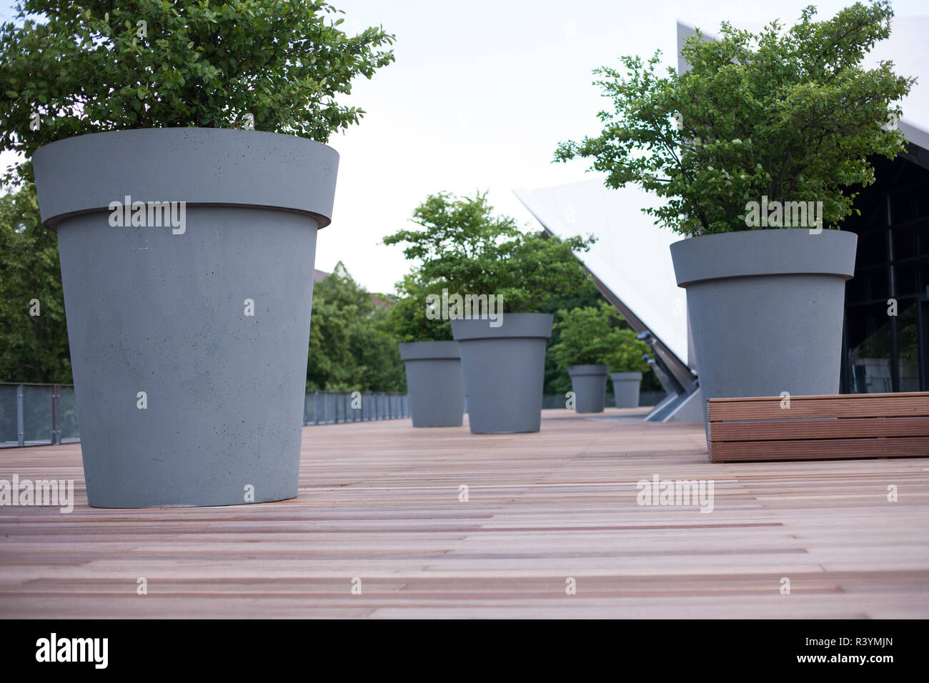 pot de fleurs g ant gris avec plante verte au parc gros arbres en pots jeu bush sur city square. Black Bedroom Furniture Sets. Home Design Ideas