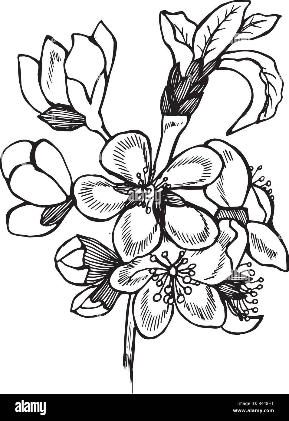 Illustration Noir Et Blanc De Fleurs De Cerisier Idee De Tatouage