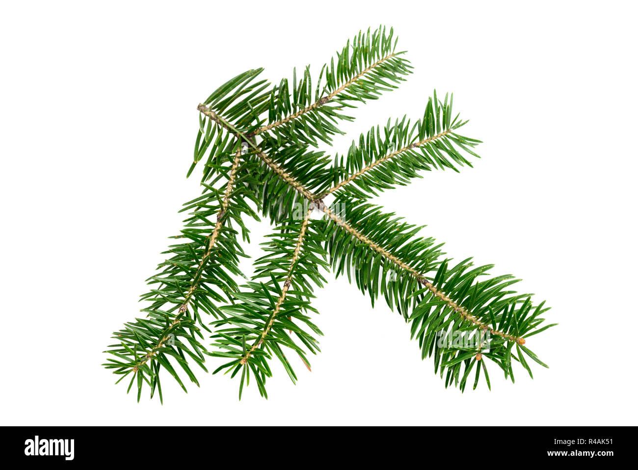 Direction générale de l'arbre de Noël de l'Evergreen isolé sur fond blanc. L'élément de conception Photo Stock