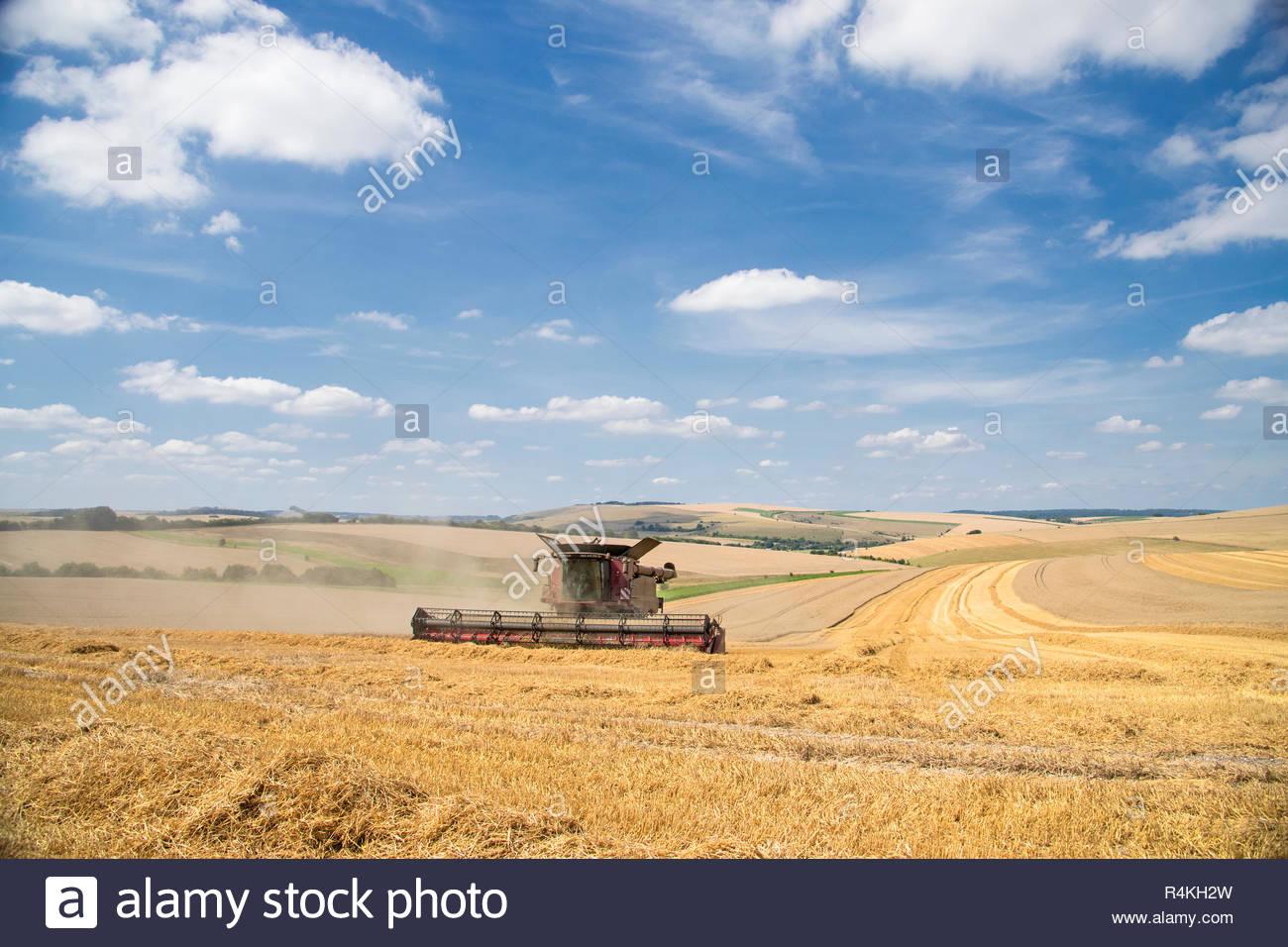 Vue de la récolte de blé d'été de coupe de moissonneuse-batteuse et de grandes cultures agricoles sur ciel bleu Banque D'Images