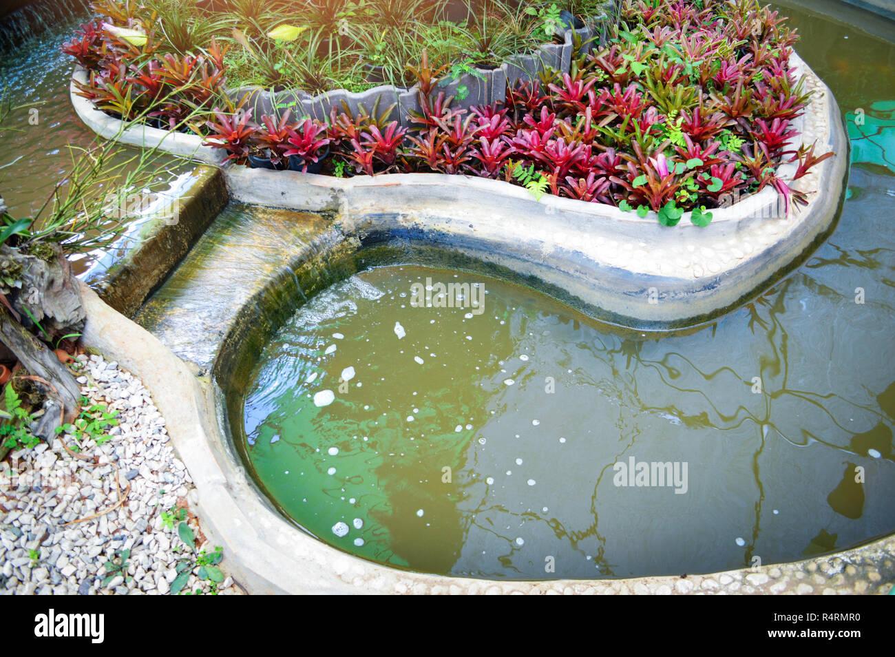Étang avec des plantes de jardin / petite cascade et la création d ...