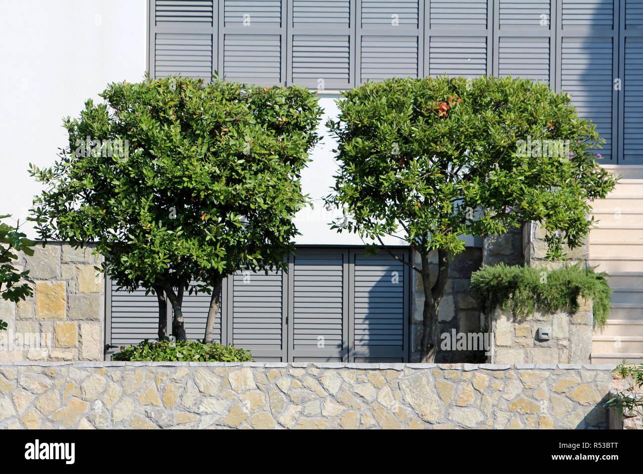 Plante Sur Les Murs mur de pierre planté photos & mur de pierre planté images