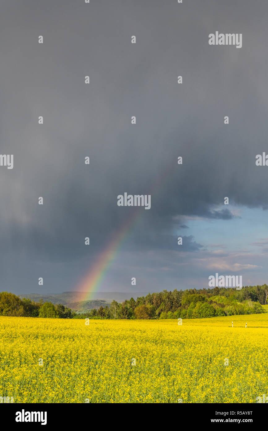 Les nuages de tempête et arc-en-ciel sur un champ de colza, orages, Thuringe, Allemagne Banque D'Images