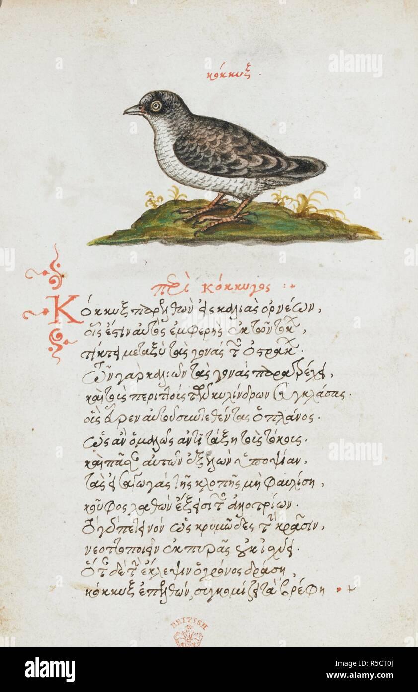 Dessin Plume Et Encre D Un Oiseau Avec Lavage De Couleur