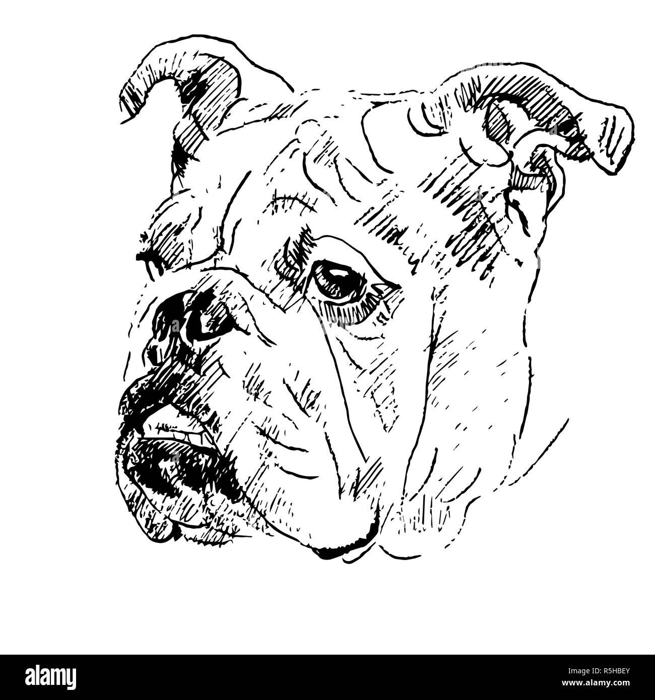 Coloriage Bouledogue Anglais.Cartoon Bulldog Photos Cartoon Bulldog Images Page 7 Alamy