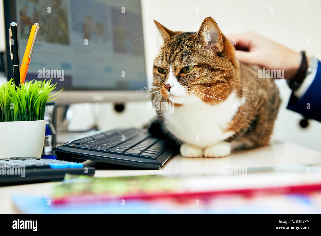 Chat Drole Avec En Bureau Scene D Affaires Photo Stock Alamy
