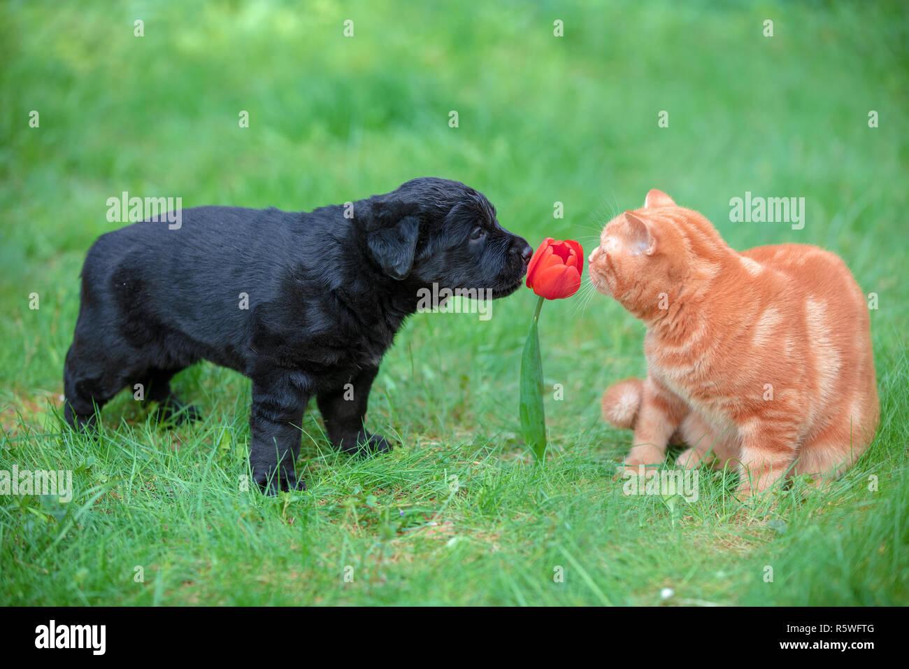 Animaux Droles Petit Chiot Et Chaton Jouer A L Exterieur Dans Le Jardin D Ete Chat Et Chien Reniflant Fleur Tulipe Rouge Photo Stock Alamy
