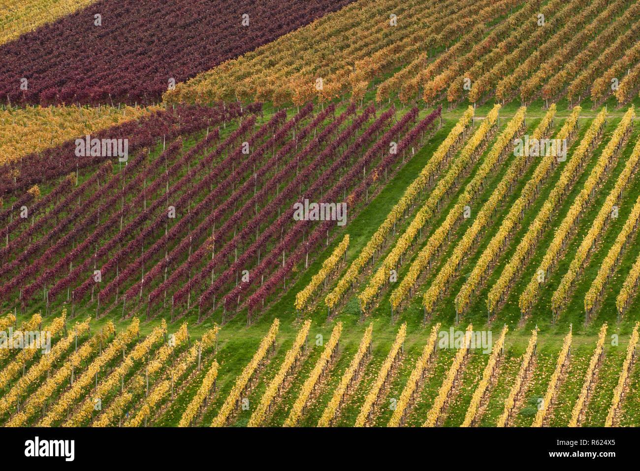 Vigne d'automne Banque D'Images