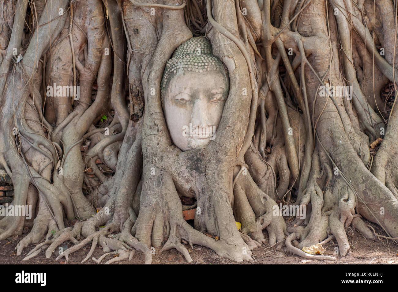 Grande tête de Bouddha en pierre dans Fig Tree Roots, Wat Mahathat, Ayutthaya, Thaïlande, Asie du Sud, Asie Banque D'Images