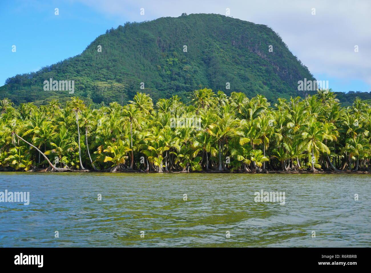Les cocotiers luxuriants sur la rive du lac Fauna Nui avec le mont Moua Tapu en arrière-plan, l'île de Huahine, Polynésie Française, Pacifique sud Photo Stock