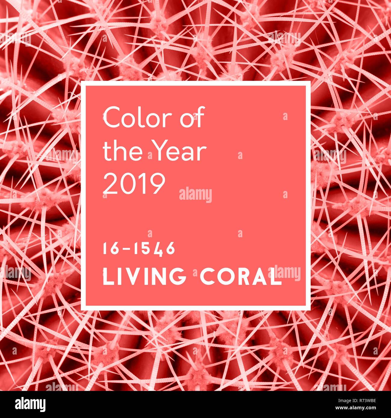 Résumé fond. Épines de cactus dans le quartier branché de coraux vivants couleur pastel. Inscription couleur de l'année 2019 Photo Stock