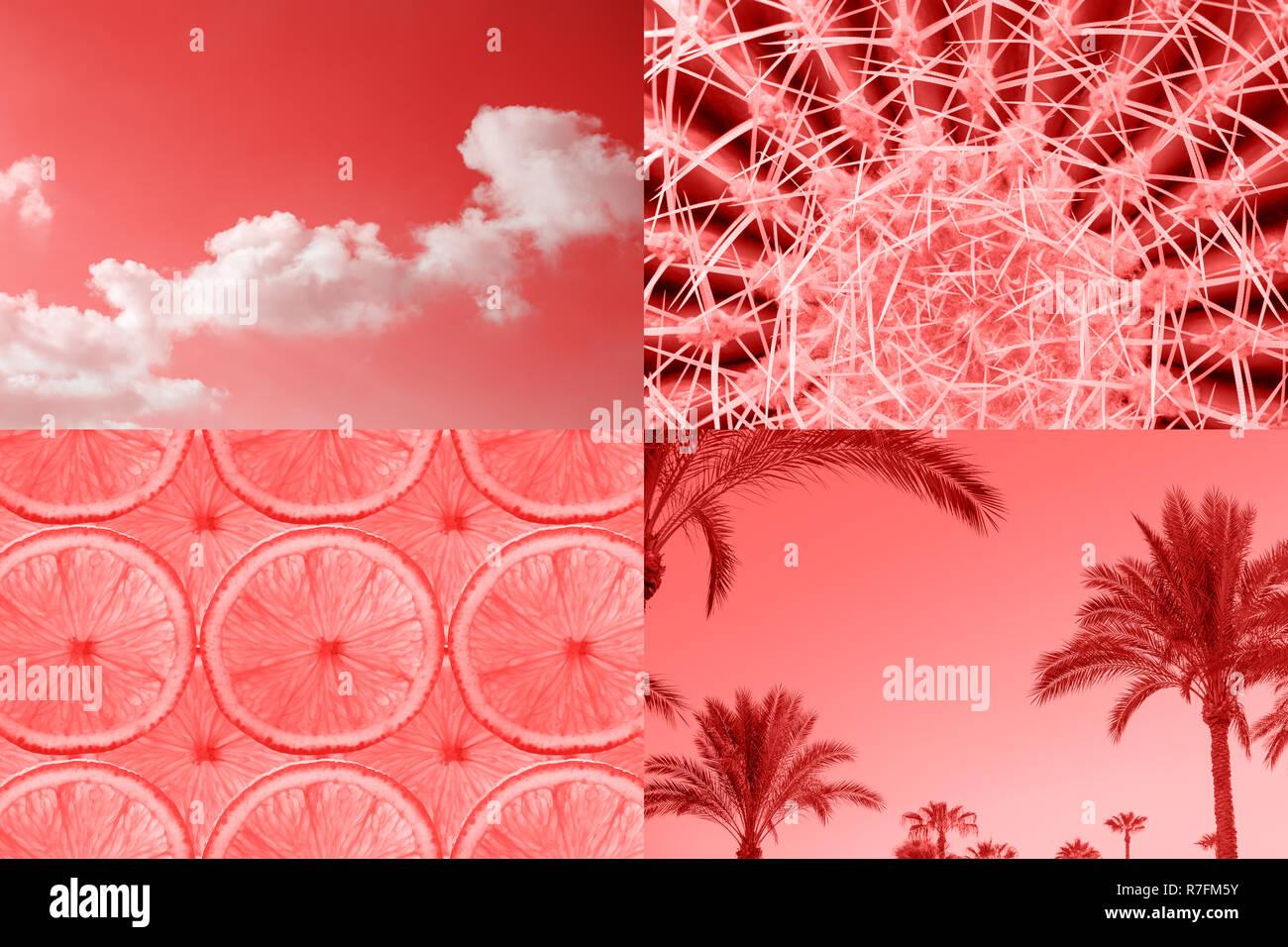 Ccreative Tropical inspiré par collage couleur corail vivant de l'année 2019. L'humeur de l'été, la mode minimal. Photo Stock