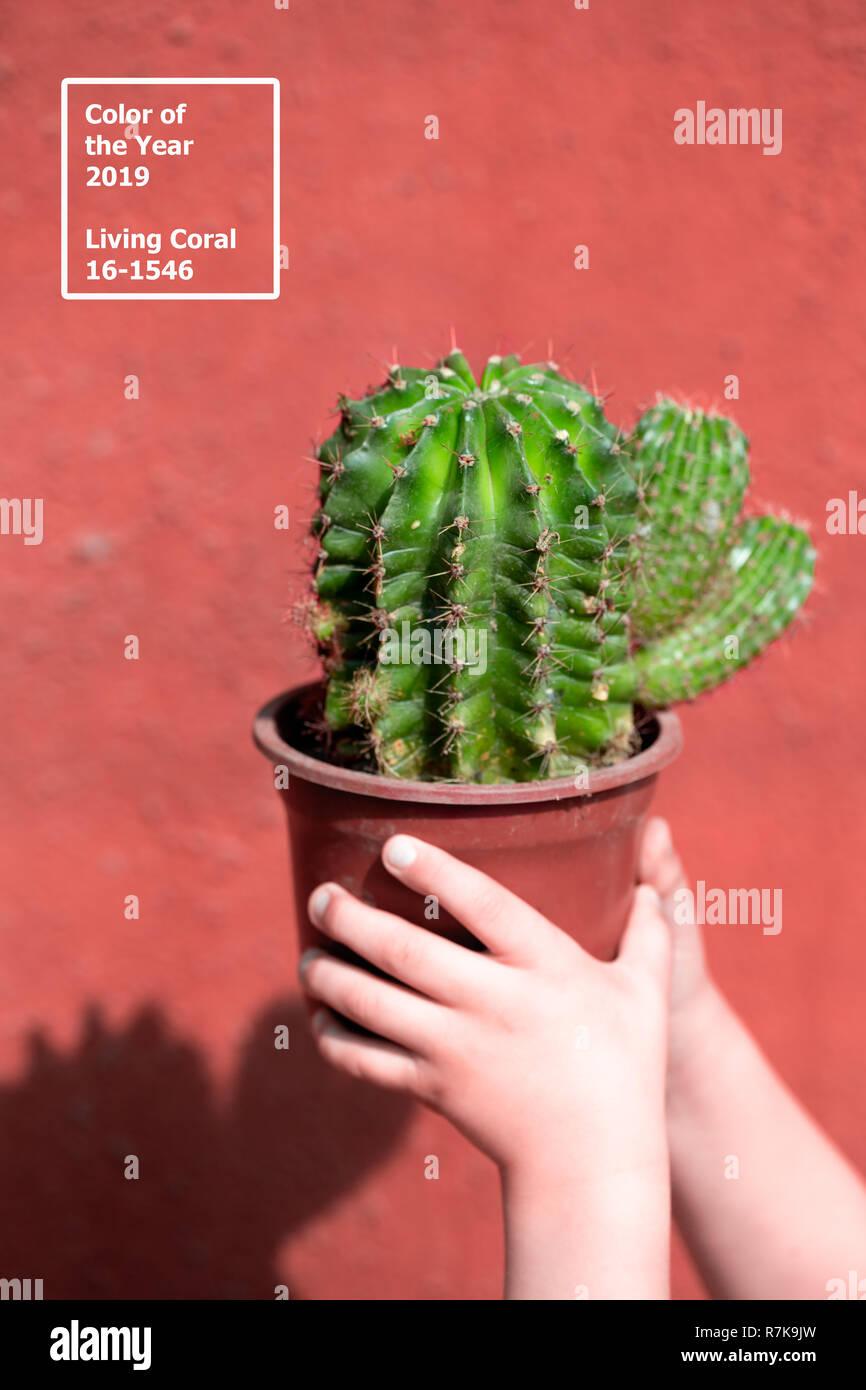 Corail vivant 2019. contexte avec cactus. Corail vivant. Couleur de l'année 2019. Photo Stock