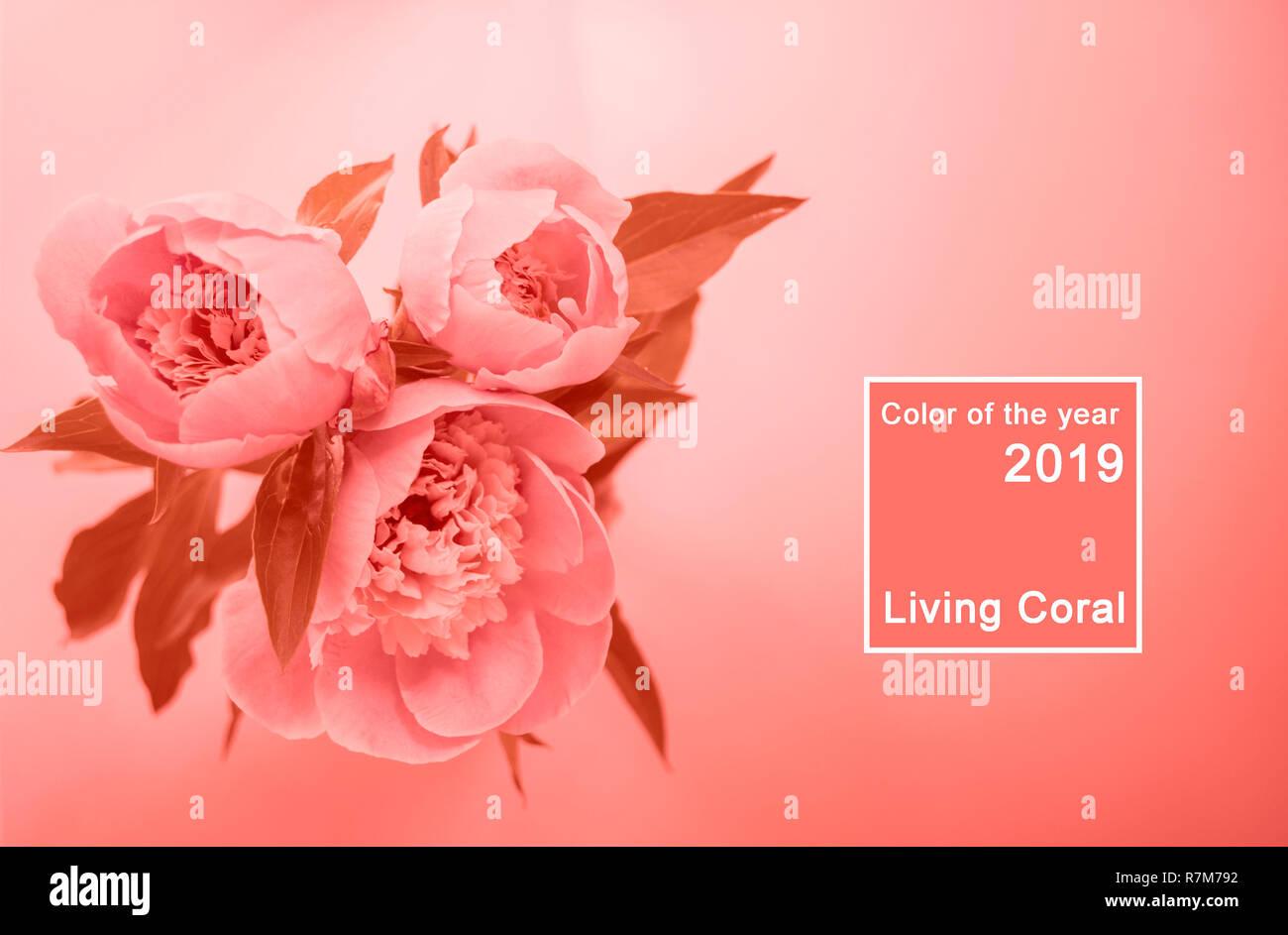 Vue de dessus de la vie couleur corail bouquet de pivoines. Couleur de l'année 2019 concept. Photo Stock