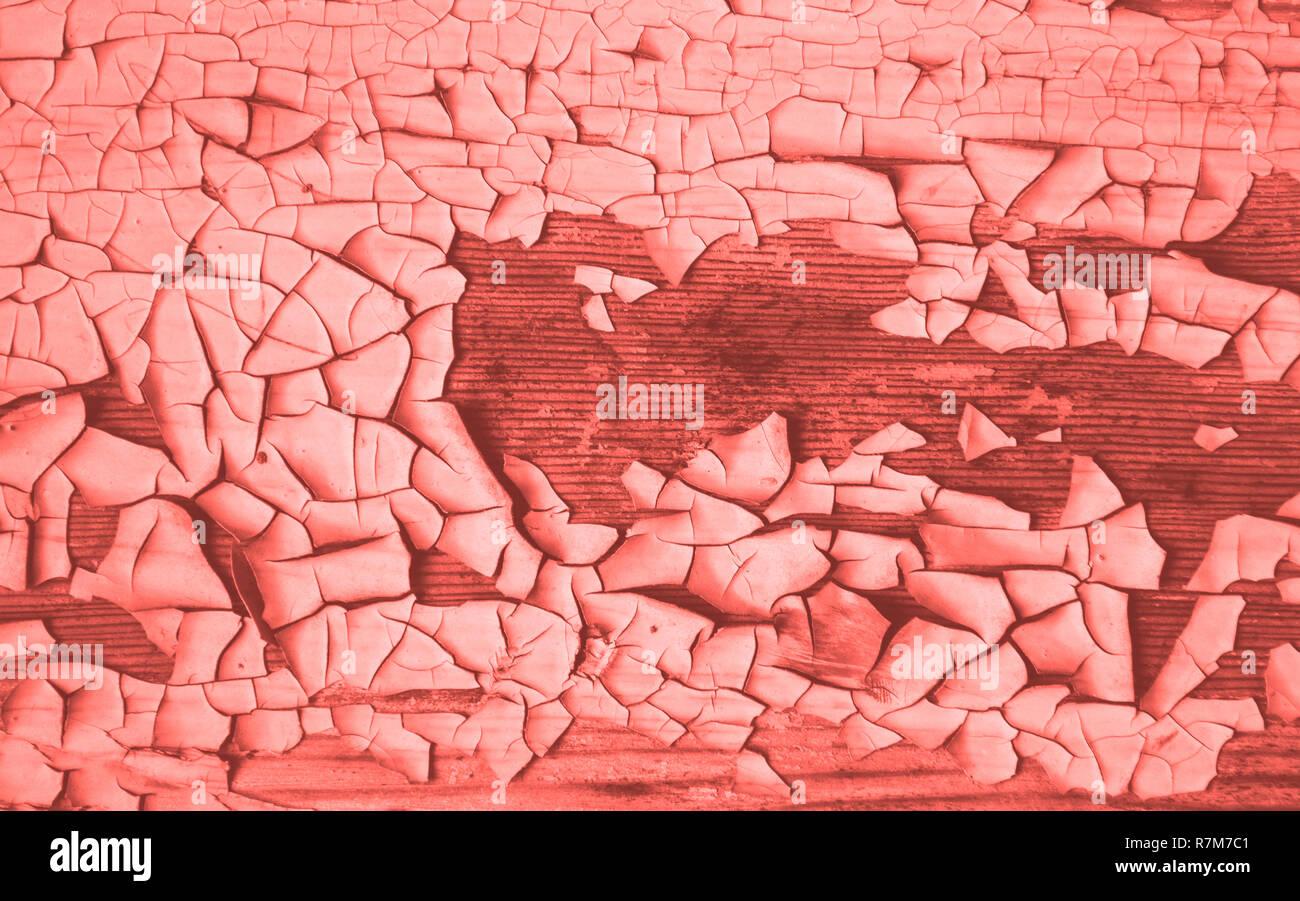 Trendy corail vivant bakground. La texture de la peinture ancienne et décortiquées sur fond de bois. Photo Stock