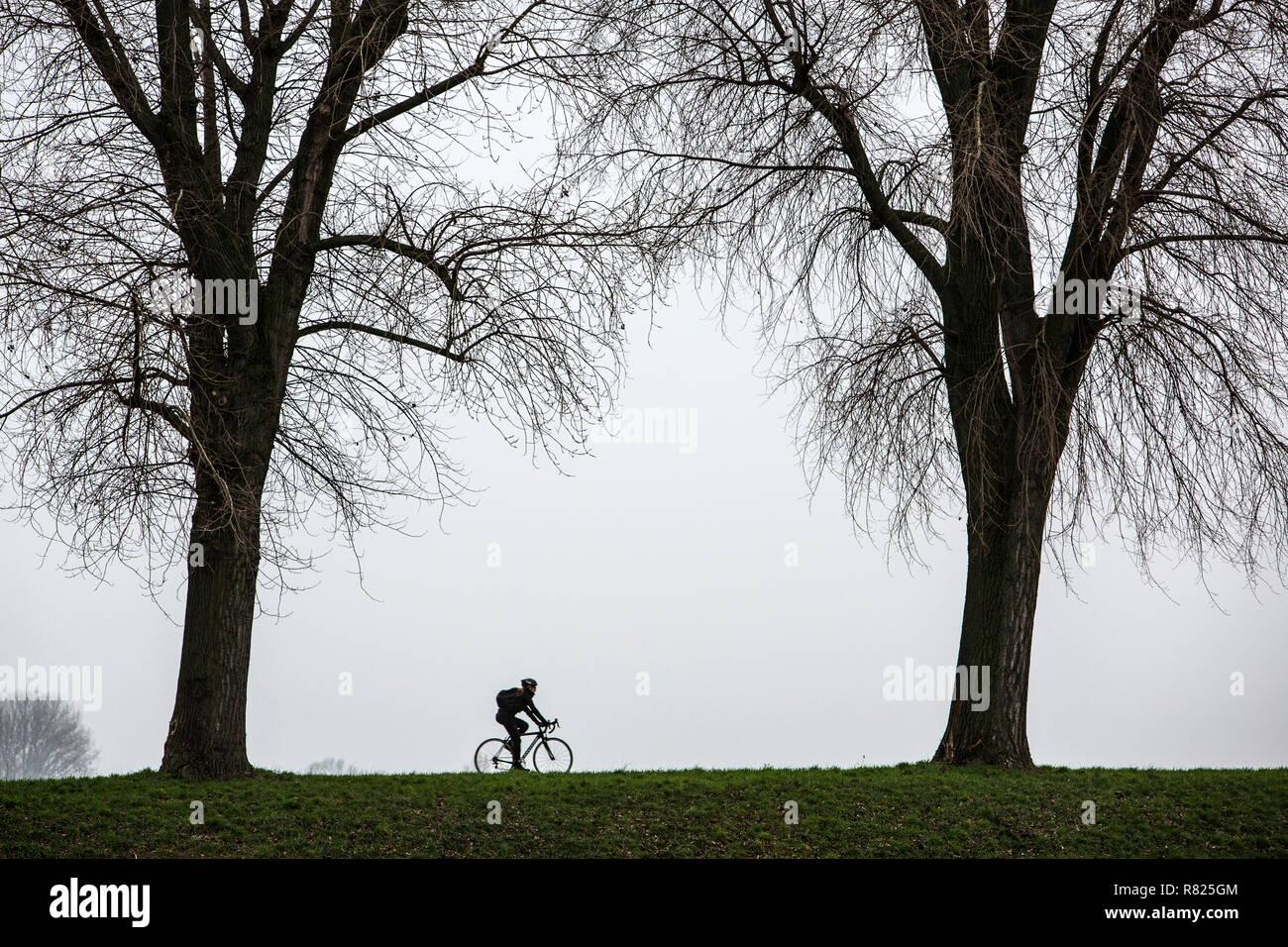 Morne, cycliste de l'hiver, le brouillard, les arbres nus, bei Stockum, DŸsseldorf, Rhénanie du Nord-Westphalie, Allemagne Photo Stock