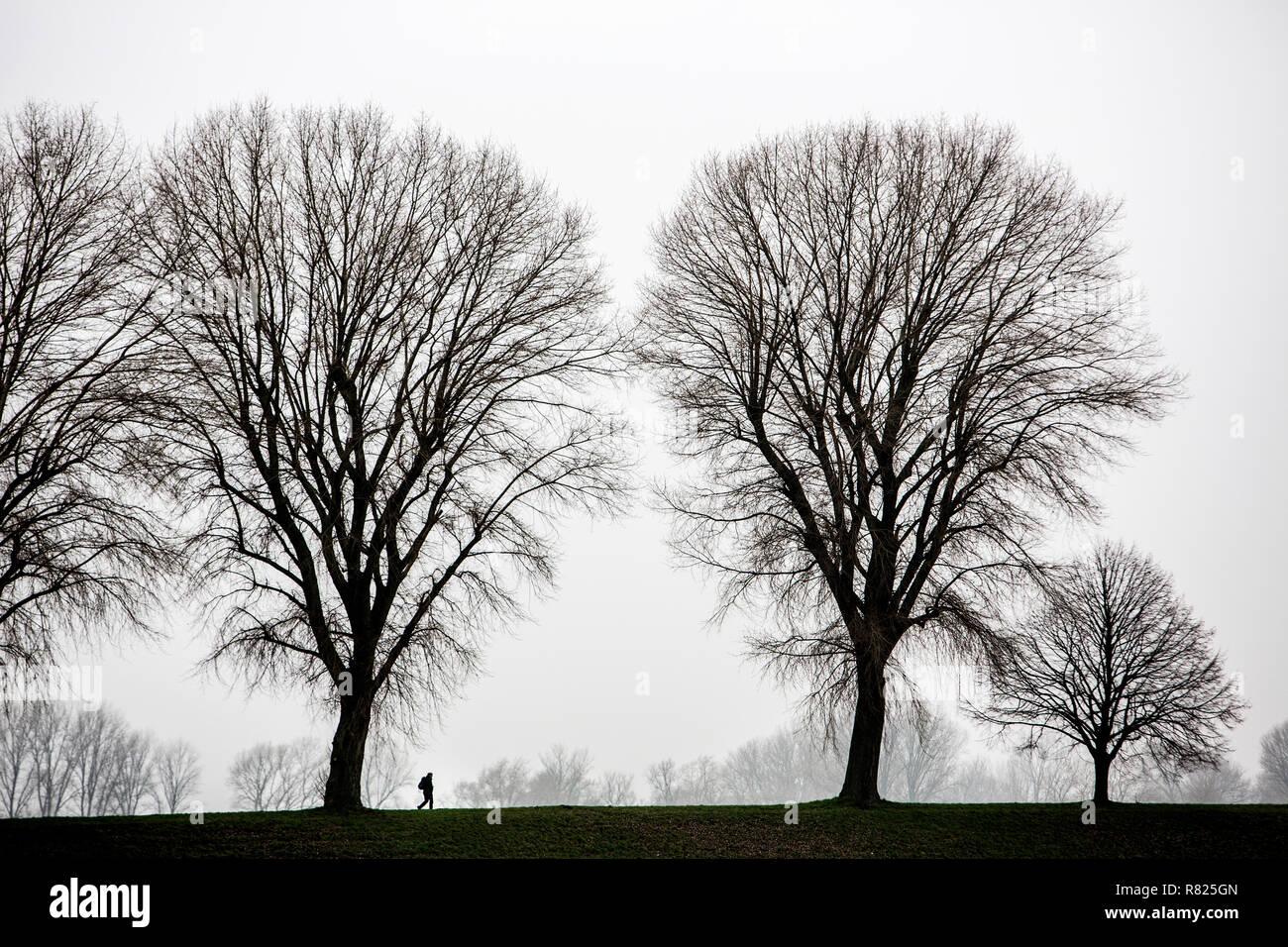 Météo d'hiver maussade, le brouillard, les arbres nus, bei Stockum, DŸsseldorf, Rhénanie du Nord-Westphalie, Allemagne Photo Stock