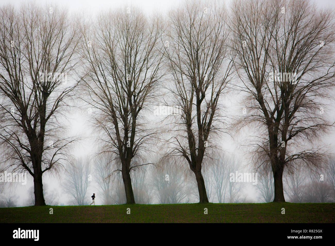 Jogger, terne de l'hiver, le brouillard, les arbres nus, bei Stockum, DŸsseldorf, Rhénanie du Nord-Westphalie, Allemagne Photo Stock