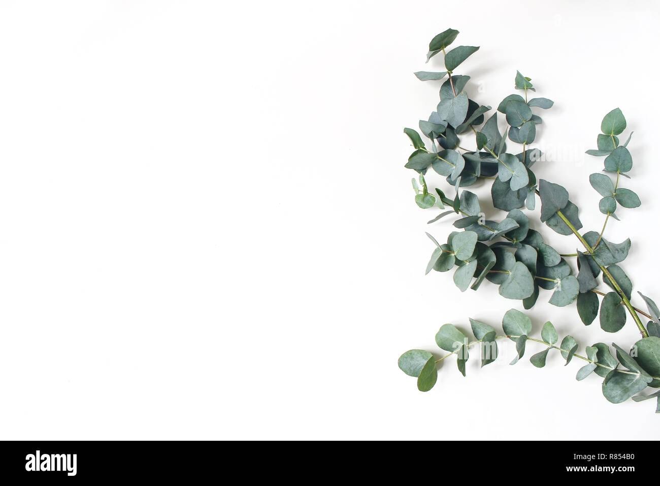 angle de trame, faite de feuilles et de branches d'eucalyptus vert