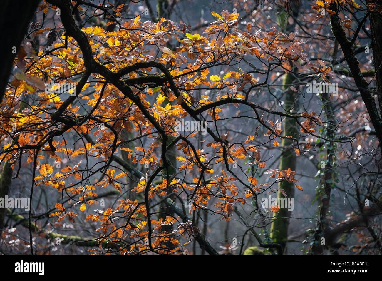 foto de Forêt d'automne. Feuilles de jaune et orange dans les branches d ...