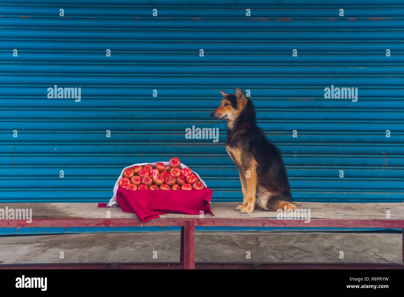 Fruits et chien Photo Stock