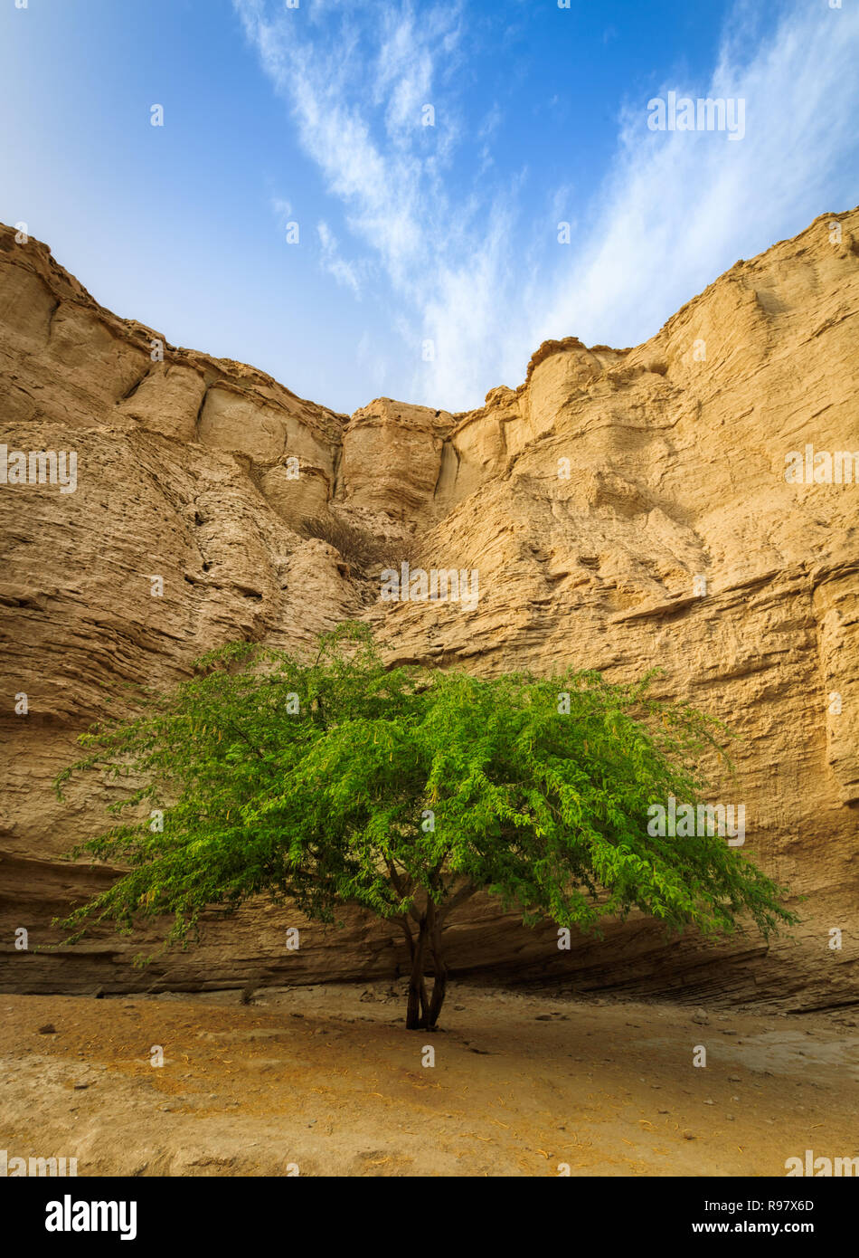 L'Iran. L'île de Qeshm,Lonely tree Photo Stock