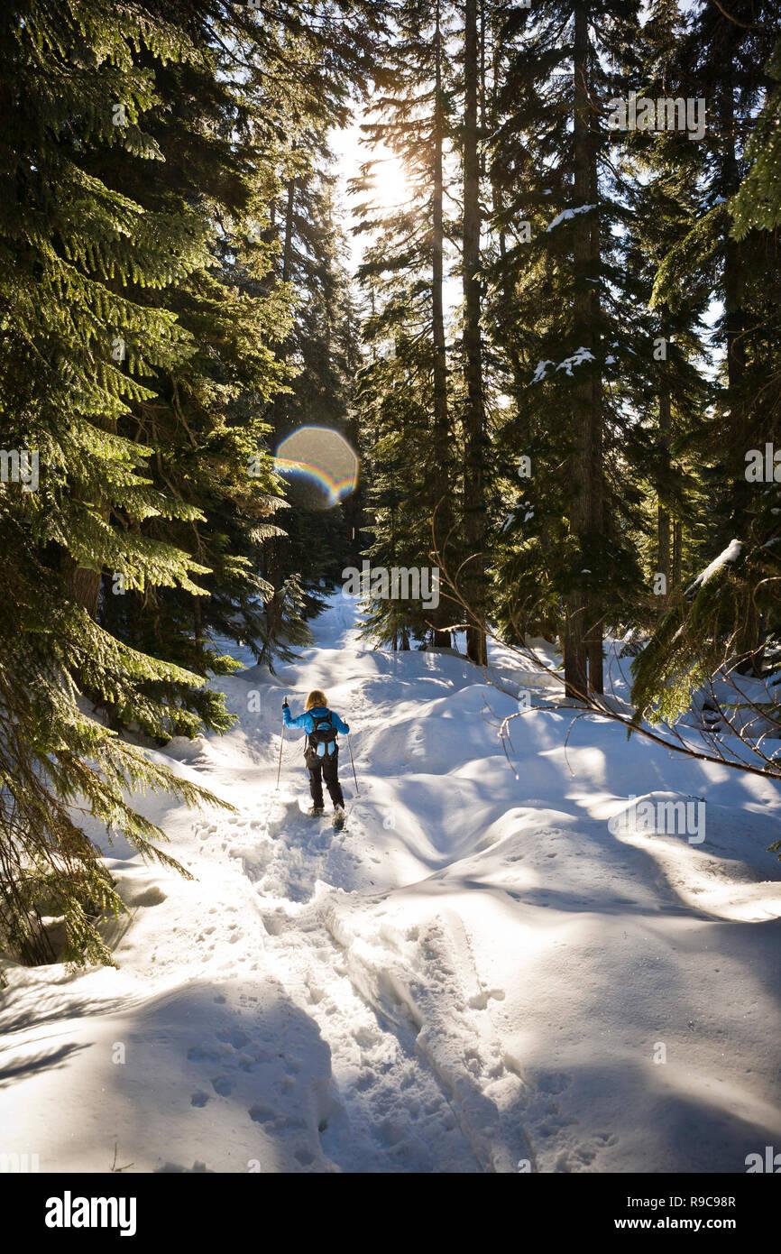 Une femme en raquettes à travers une forêt sur une journée ensoleillée. Photo Stock