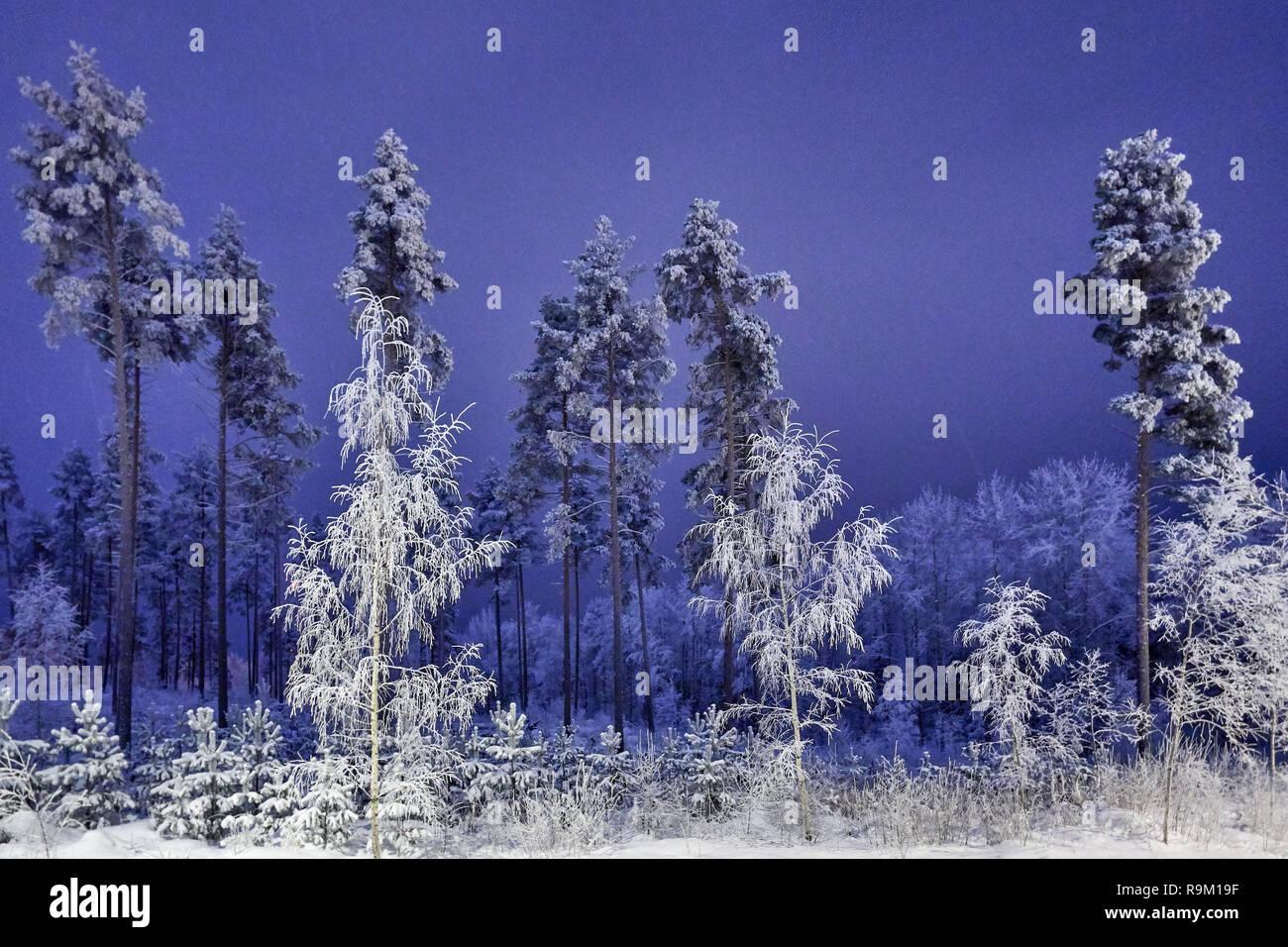 Nuit D Hiver Tranquille Et Beau Ciel Bleu Neige Arbres