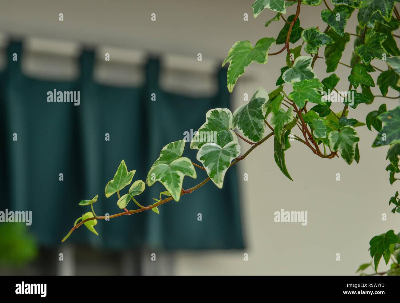 Les petites plantes au jardin botanique en journée ensoleillée. Photo Stock