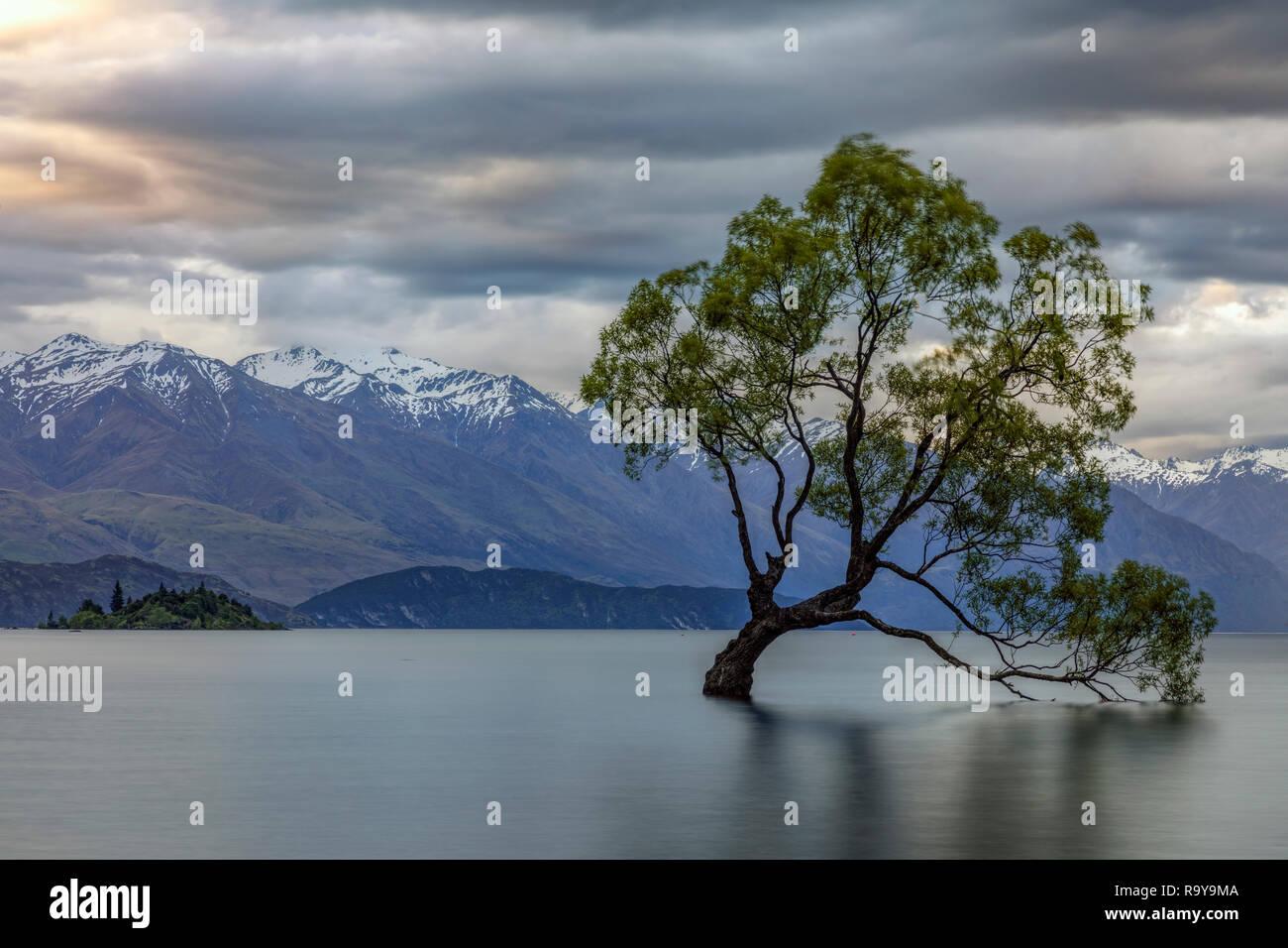 Wanaka, Queenstown, Otago Lakes District, île du Sud, Nouvelle-Zélande Banque D'Images